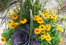Gardening - Flower Pots