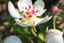 Flower / Blomster fra haven