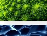 Formen in der Natur