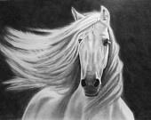 Horses / by Christy Doyea