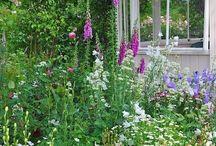 Gardening / by Caroline Grace