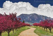 Fabulous Nature