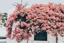 fioriMuro Di Fiori