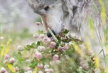 Dogs / Furry animals
