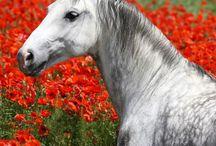 Horses / by Haruka Mitchru