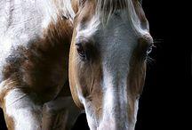 Horses / by Jane Vaughn