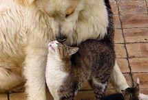 Cães & Gatos uma ternura só vista