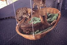 Brilliant idea for kitty hammock