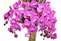 Floral desings :)