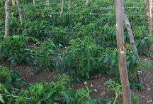 Agriturismo Beatilla Giardino