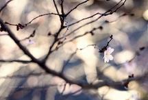 Photography / by Gayatri Chincholkar