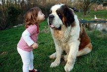 Cute Dogs  / by Garfield Lynns