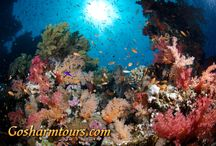Ras Mohammed National Park Sharm El Sheikh