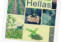 Stevia Hellas coop