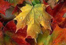 Meu amorzinho pelo outono... por que não? ♡