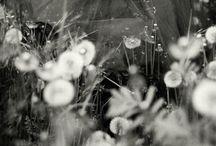 Photography / by Christilyn Meyer