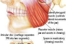 Muscle function and pain