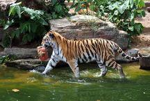 Animals / animals pictures, pictures of animals, zoo, wild animals, pets, animal friendships, animals photos, photos of animals, zoo animals, animal best friends / by Vanessa Morgan