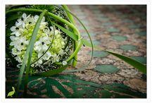 LENES PHOTOS - pick a flower