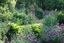 Helen's Haven, my garden / Sharing photos from my 1/2 acre wildlife habitat in Raleigh, NC