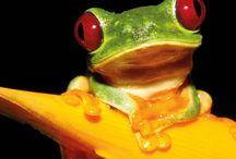 biomimicry voor in het klaslokaal / Leuke opdrachten en voorbeelden van biomimicry voor in de klas