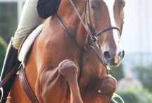 middleburg / for the love of horses