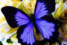 Kelebek en sevdiğim ❤️