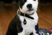 I will have one day / Things I really really want... Número uno those Tory burch boots!  Number two a pit bull puppy:)