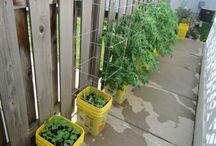 DIY Self-watering Pots