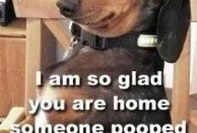 I love Shelter Dogs!