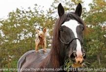 Horses / by Sharon Johnstone
