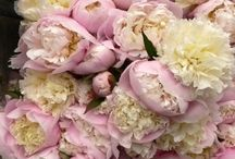 P E O N E Y ... / Peonies are the most beautiful flowers.  I could fill my house with them. / by ~Janet Copeland~