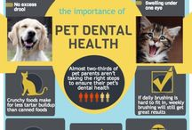 Pet Dental Health / A board dedicated to those beautiful teeth on your beautiful cat or canine.  Get tips, tricks, and see some beautiful pet smiles!