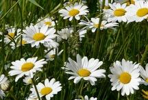 NAŠE ZAHRADY / NAŠE ZAHRADY  Zábavné obrázkové magazínové stránky o zahradě květinách s písničkami http://nasezahrady.blogspot.cz