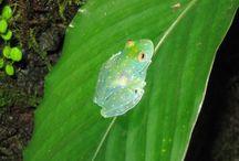 Inspiration in Nature - Reptiles & Amphibians