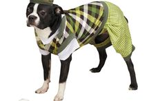 Halloween Costumes / Enter your dog in our Facebook Halloween Dog Costume Contest. Winner gets $30 Gift Certificate to our website!