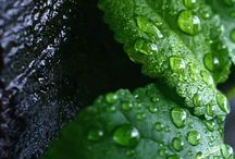 nature remedies