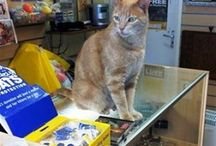 Shop Cats / Cats at work.