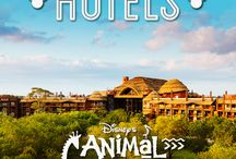 Animal Kingdom Lodge and Villas / Saving ideas for our vacation for fall 2015