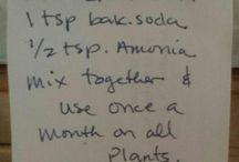 Potplante