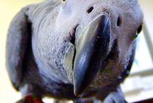 Papagàjok