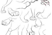 Cats anatomy