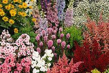 garden pink borders