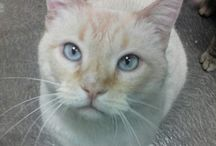 FIV Positively Adoptable Cats / In memory of Bambino (Bambi) & all FIV cats
