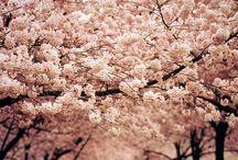 **Flower Power**