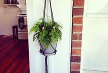 ACE / Hanging planters / by Courtney Bennett