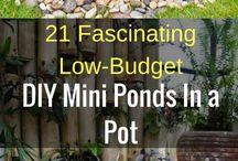 Mini ponds