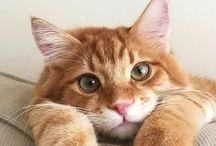 Про котов)