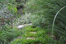 AUSTRALIA-garden