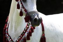Beautiful loving animals / by Shelitha Blankenship